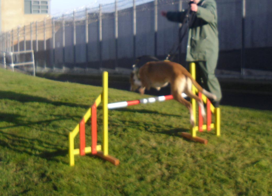 Tynewater Dog Training